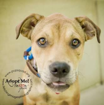 kaycee dog for adoption